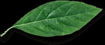 herbes-fraiches
